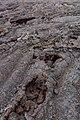 Lava Tubes (145211273).jpeg