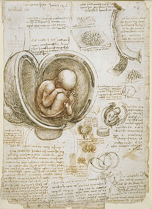 Studies of the Fetus in the Womb