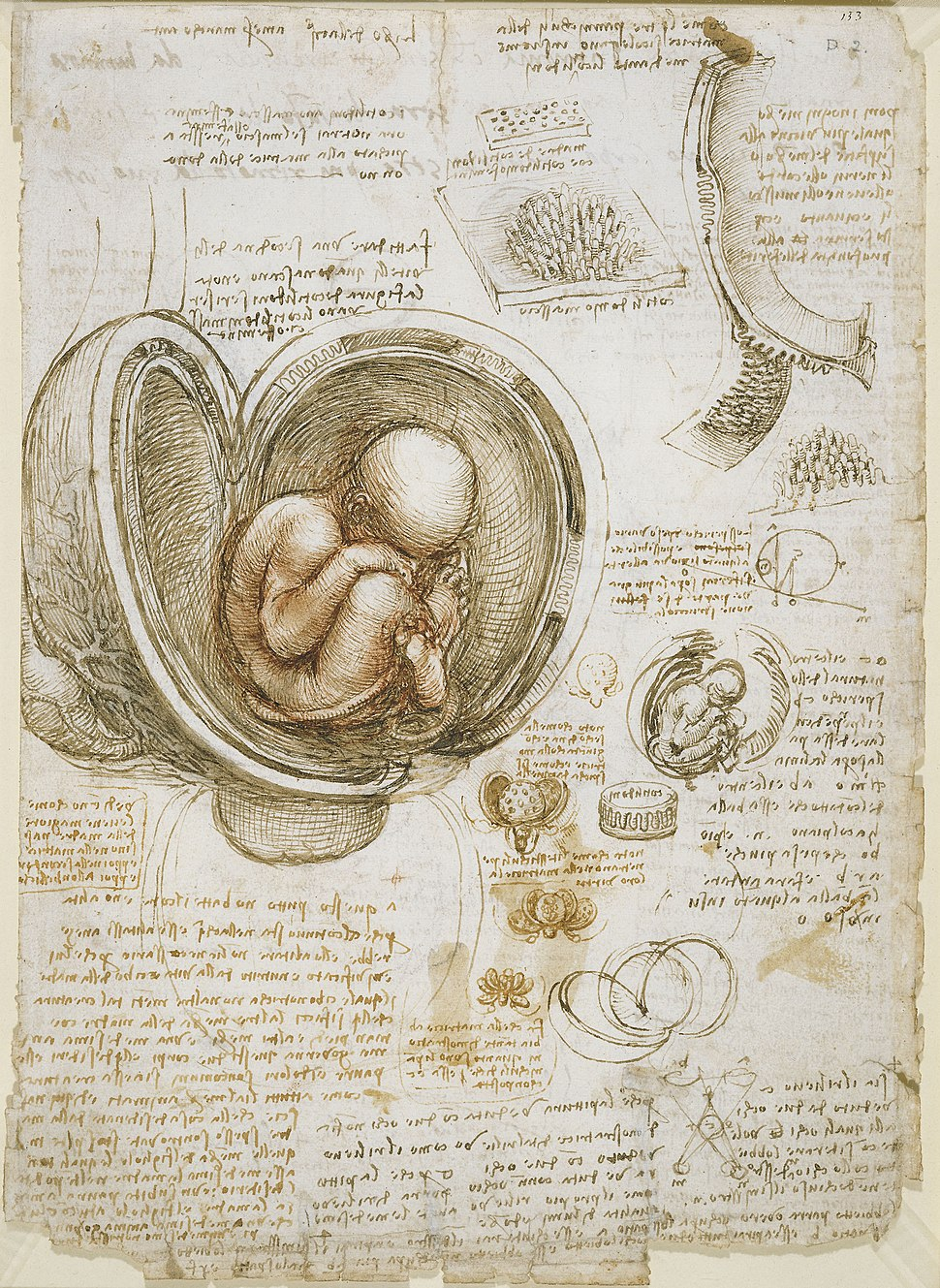 Leonardo da Vinci - Studies of the foetus in the womb