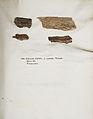 Lichenes Helvetici IX X 1833 031.jpg