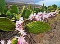 Lilies an cactuses (30557000035).jpg