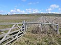 Limekiln Hill, West Bexington - geograph.org.uk - 759079.jpg