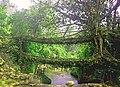 Living Root Bridge in Cherrapunjee, Meghalaya.jpg