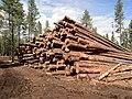 Logging (8692551051).jpg