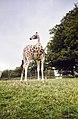 Longleat Safari Park, Warminster - panoramio.jpg