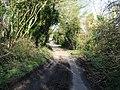Looking NE along Wickham Bushes Road - geograph.org.uk - 363665.jpg