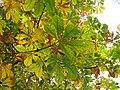 Los colores del otoño (15575191998).jpg