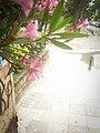 Lush Cubist Spark - panoramio.jpg
