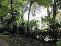 Madeira em Abril de 2011 IMG 1713 (5663173877).jpg