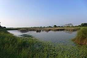 Mai Po Marshes view 2016.JPG