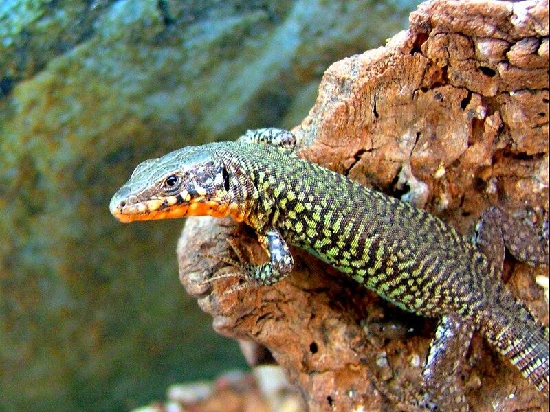 Käärmeenpääkala