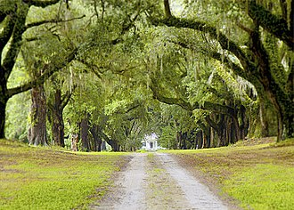"""Mansfield Plantation - The """"Avenue of Oaks"""" approach to Mansfield Plantation"""