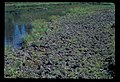 Many elk tracks at Clover Lake shore. 101981. slide (8a019393ca554a119952cfaea0dc3ecb).jpg