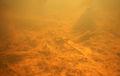 MareLambersart small pond Underwater05.JPG