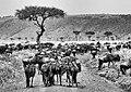 Masai mara (15909019161).jpg