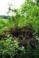 Mauerreste der Eselsburg über dem Eselsburger Tal.jpg