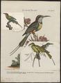 Merops viridis - 1700-1880 - Print - Iconographia Zoologica - Special Collections University of Amsterdam - UBA01 IZ16800327.tif