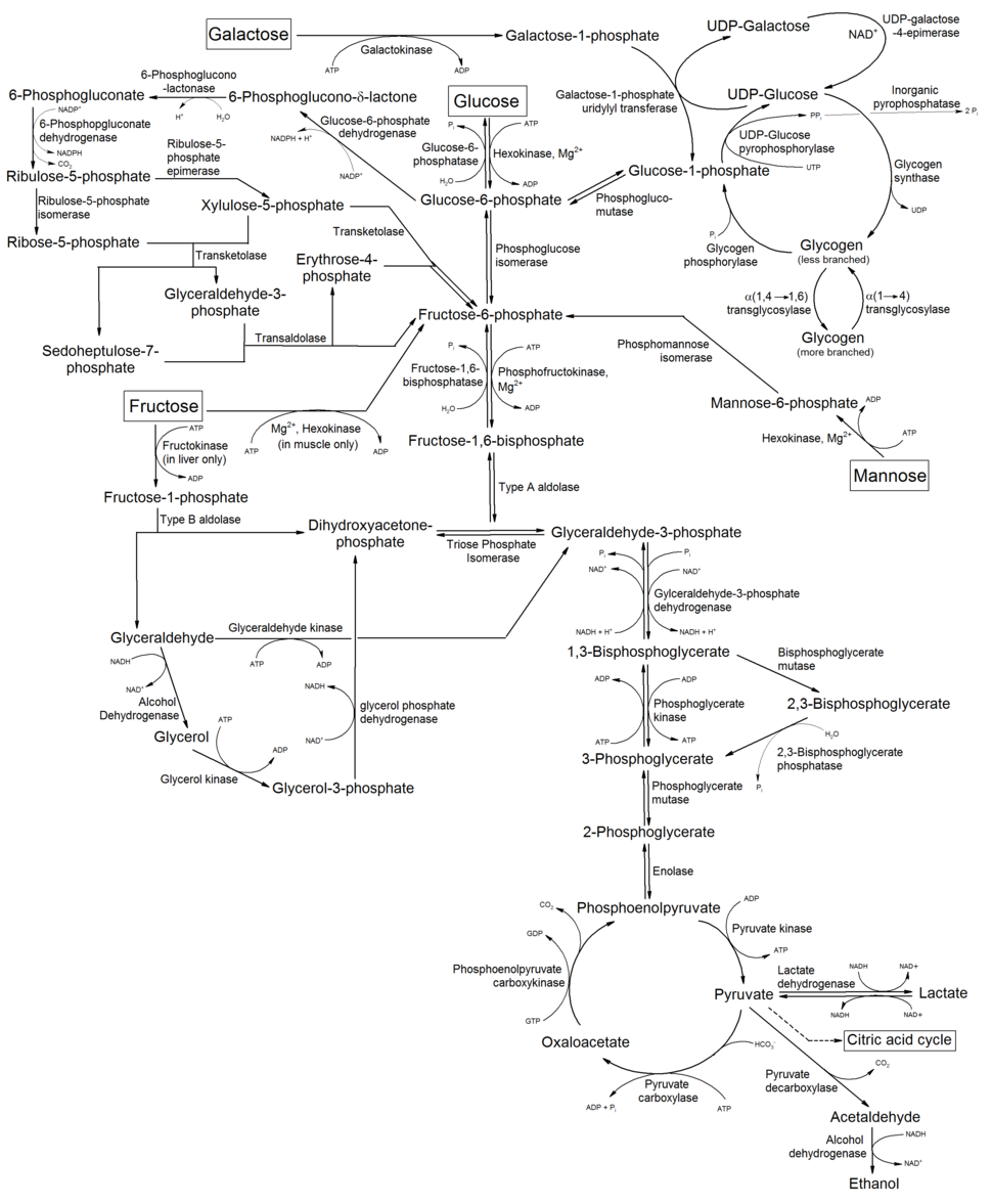 Metabolism of common monosaccharides, and related reactions