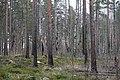 Metsää Käärmekallion alueella, Liesjärven kansallispuisto, Tammela, 15.11.2014 (4).JPG