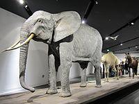 Part of the display on animals in war at the Militärhistorisches Museum der Bundeswehr