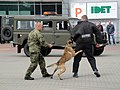 Military working dog of the Czech Army (2).jpg