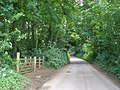Minor road, through Danes Wood - geograph.org.uk - 1350930.jpg