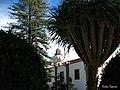 Mirando la cúpula de basílica - panoramio.jpg