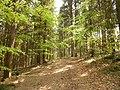 Mischwald, Buchaberg.jpg
