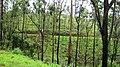 Misty Grass land @ Gavi - panoramio (4).jpg