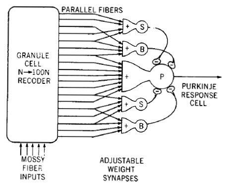 Model of Cerebellar Perceptron