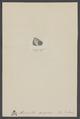 Monodonta - Print - Iconographia Zoologica - Special Collections University of Amsterdam - UBAINV0274 005 02 0035.tif