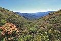 Monteverde Reserve Costa Rica 10.jpg