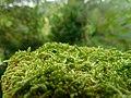 Moss on a Fencepost.jpg