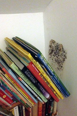 Damp (structural) - Mould growth caused by condensation in dead air pocket behind books
