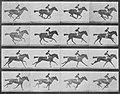 Muybridge, Eadweard - Annie G. mit Jockey (0.31 Sekunden) (Zeno Fotografie).jpg