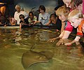 NC Aquarium Skate and Ray Encounters touch pool - Claire Aubel photo for NC Aquariums.jpg