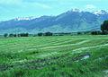 NRCSMT84001 - Montana (5047)(NRCS Photo Gallery).jpg