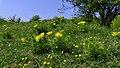 NSG Heeseberg Adonis 02.jpg