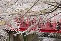 Nakameguro 2009-04-05 (3448463429).jpg