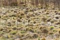Nationalpark Eifel-2.jpg