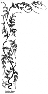<i>Desmoncus</i> genus of plants