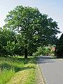 Naturdenkmal Großbockedra Roteiche am Hahn.jpg