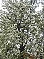 Nature in Smolensk - 45.jpg
