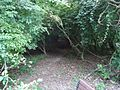 Nature pathway in Watchung NJ park.jpg