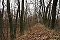 Nature reserve Šance in autumn 2012 (27).JPG