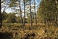 Nature reserve Dobrockovske hadce in autumn 2011 (23).JPG