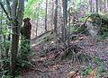 Nature reserve Macie diery (4).jpg