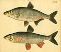 Naturgeschichte in Bildern mit erläuterndem Text (Taf. CXXXVII) (6058682997).jpg