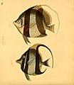 Naturgeschichte in Bildern mit erläuterndem Text (Taf. XL) (6059210500).jpg