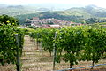 Nebbiolo vines above town of Barolo.jpg